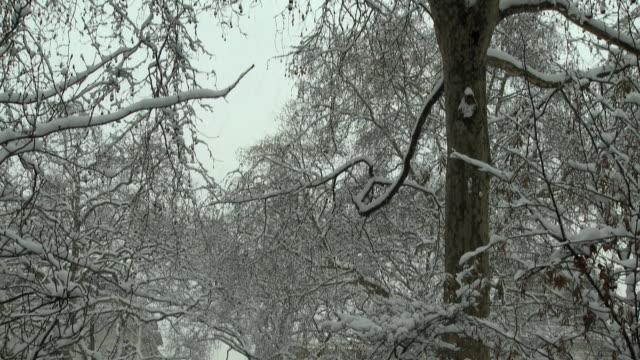vídeos de stock e filmes b-roll de ws td statue of william iii covered in snow at st. james's square, london, united kingdom - figura masculina