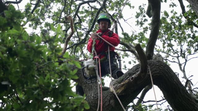 staying safe in the oak tree - lumberjack stock videos & royalty-free footage