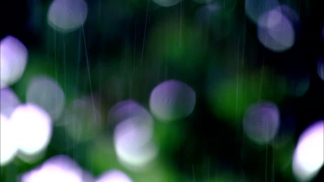 steady rain falls on green plants. - costa rica stock videos & royalty-free footage
