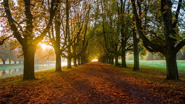 ステディカム: 秋の木路地 - 秋 - ノルトラインヴェストファーレン州点の映像素材/bロール
