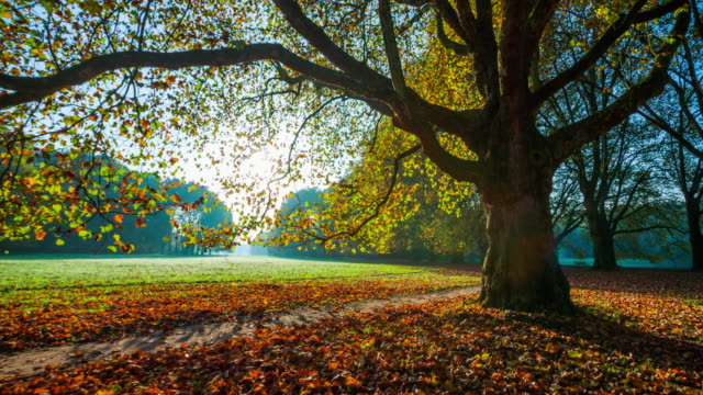 steadycam: colorful park during fall - deciduous tree stock videos & royalty-free footage