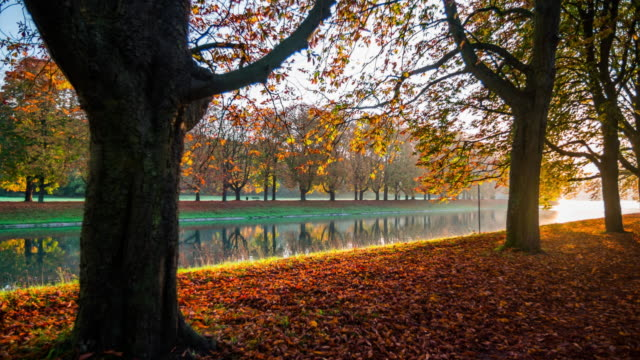 steadycam: idyllic park in autumn - fall - autumn leaf color stock videos and b-roll footage