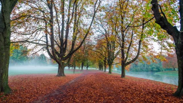 steadycam: park on a foggy autumn morning - treelined stock videos & royalty-free footage