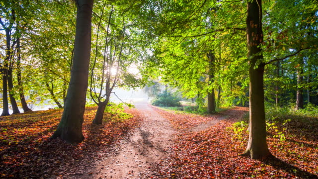 steadycam: path trough autumn forest. - autumn leaf color stock videos and b-roll footage