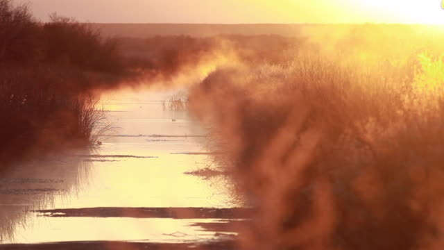 ws steam coming out from marsh water at sunset / bosque del apache, new mexico, usa - bosque del apache national wildlife reserve stock videos & royalty-free footage