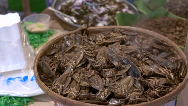 steam insect, thailand traditional food - insect stock videos & royalty-free footage