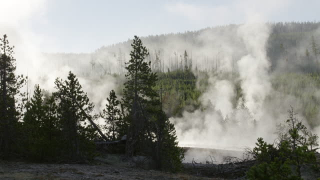 WS Steam of thermal pool hot spring geyser with forest trees and landscape at day / Yellowstone National Park, Wyoming, United States