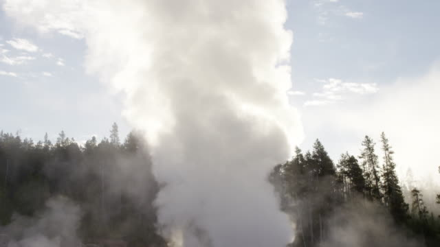 ms tu steam of thermal pool hot spring geyser with forest trees and sky at morning / yellowstone national park, wyoming, united states - thermal pool stock videos & royalty-free footage