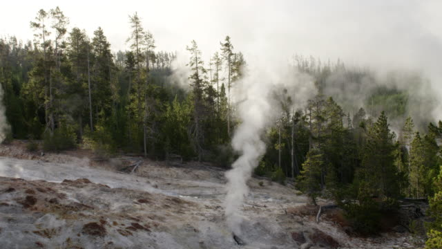 WS Steam of thermal pool hot spring geyser with forest trees and sky at morning / Yellowstone National Park, Wyoming, United States