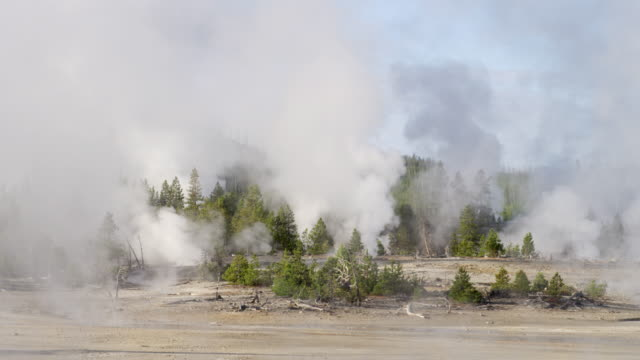 WS Steam of thermal pool hot spring geyser with forest trees and sky at day / Yellowstone National Park, Wyoming, United States