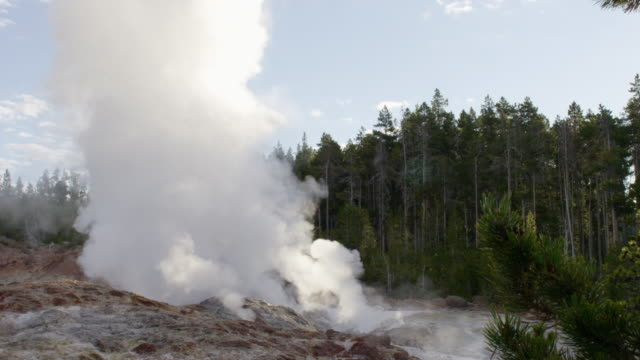 MS Steam of thermal pool hot spring geyser with forest trees at morning / Yellowstone National Park, Wyoming, United States