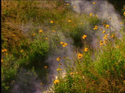 vídeos de stock, filmes e b-roll de steam rising from hot springs near wildflowers / yellowstone national park, wyoming - 2001