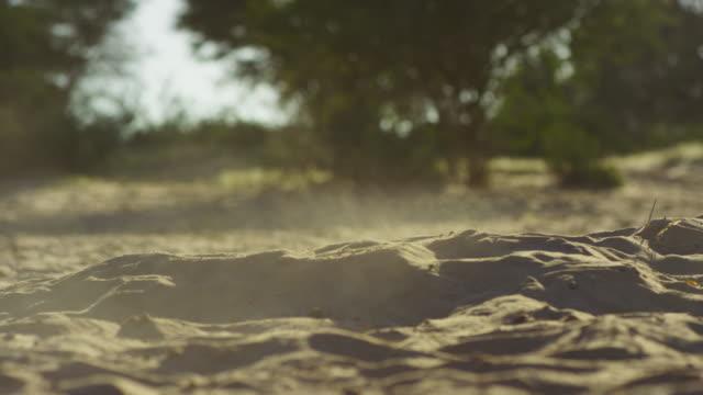vidéos et rushes de steam rising from meerkat burrow at dawn - terrier création animale