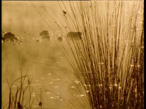 Steaming billabong and sedges at dawn, Australia