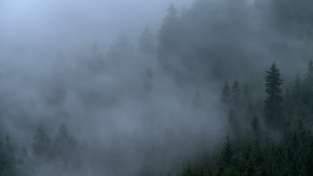 steaming forest after rain - germany stock videos & royalty-free footage