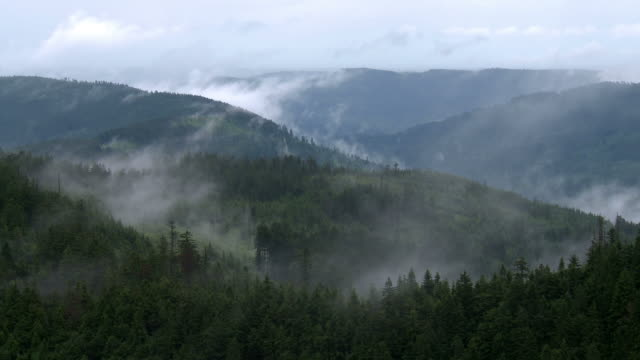 steaming forest after rain - schwarzwald stock-videos und b-roll-filmmaterial
