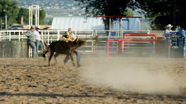 steer wrestling rodeo - cattle stock videos & royalty-free footage