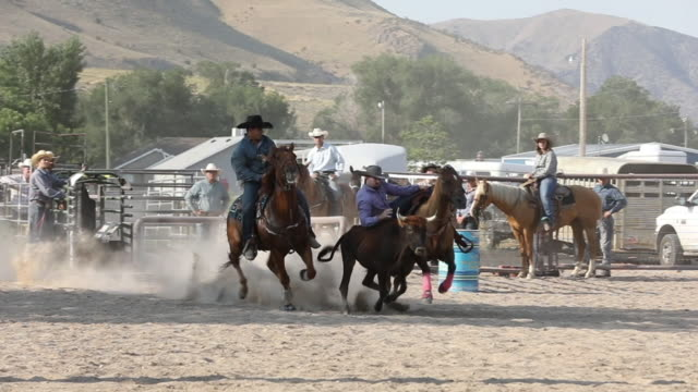steer wrestling slow motion - rodeo stock videos & royalty-free footage