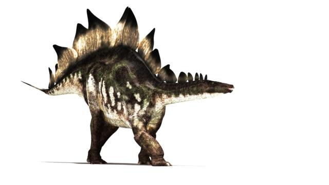 stegosaurus dinosaur animation. - jurassic stock videos & royalty-free footage