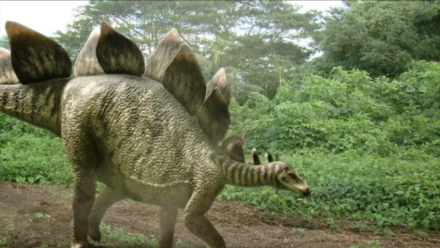 a stegosaurus follows a beaten path in computer-generated animation. - herbivorous stock videos & royalty-free footage