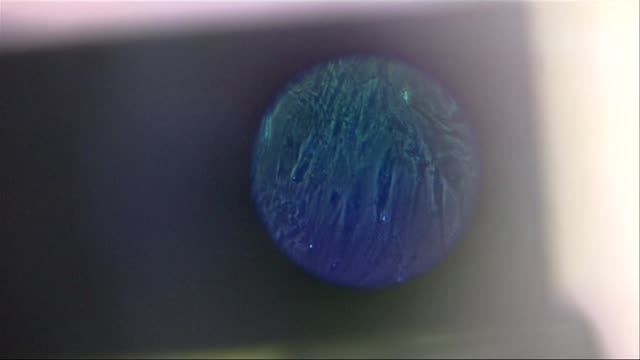 stem cells under microscope - stem cell stock videos & royalty-free footage
