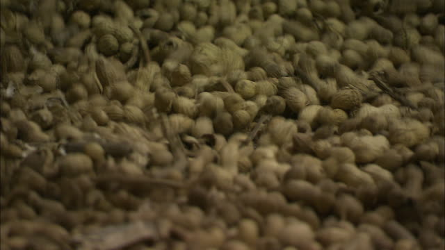 stockvideo's en b-roll-footage met stems bounce with peanuts on a gyratory separator at a food processing plant. - pinda voedsel