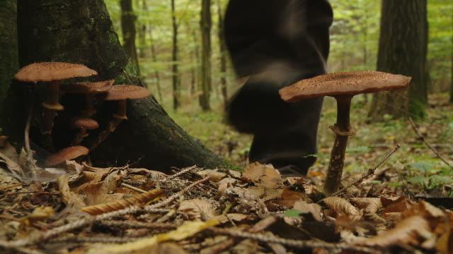 HD: Stepping On A Mushroom