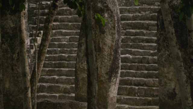 """Steps of Mayan ruin in forest, Calakmul, Mexico"""