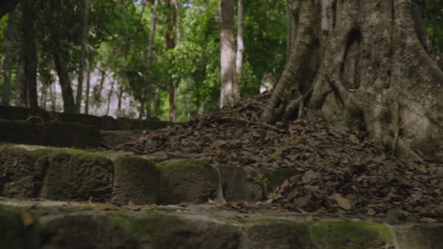 """steps of mayan ruin in forest, calakmul, mexico"" - mayan stock videos & royalty-free footage"