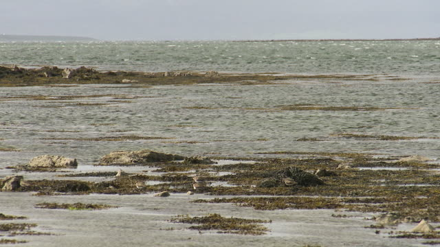 Still landscape shot of shallow water and seaweed