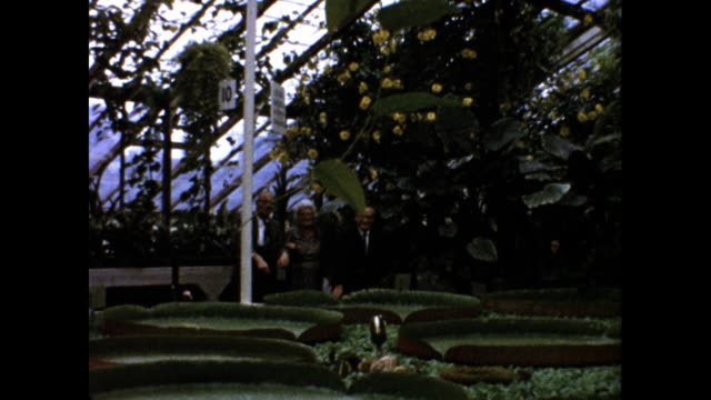 still shot of a group of welldressed people touring and talking in a botanical garden glass ceiling and yellow flowers - botanical garden stock videos & royalty-free footage