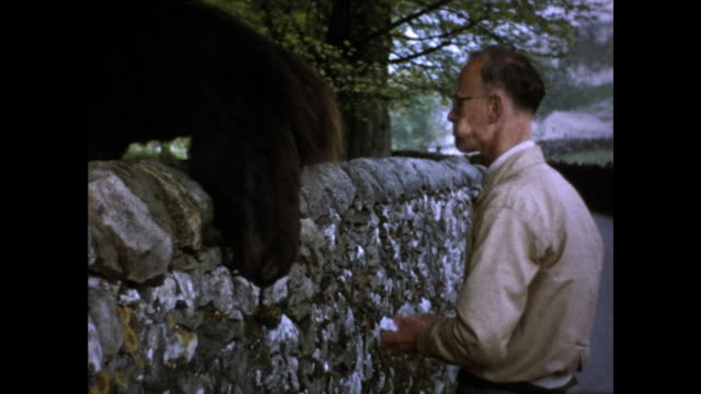 still shot of man with glasses feeding a horse over a stone fence road and trees in the background - ウマ科点の映像素材/bロール