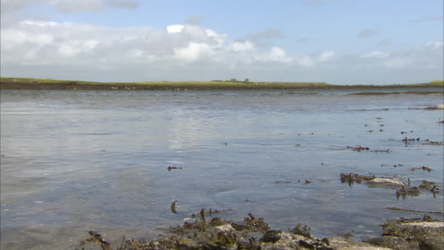 still shot of seaweed along the shore in ireland - seegras material stock-videos und b-roll-filmmaterial