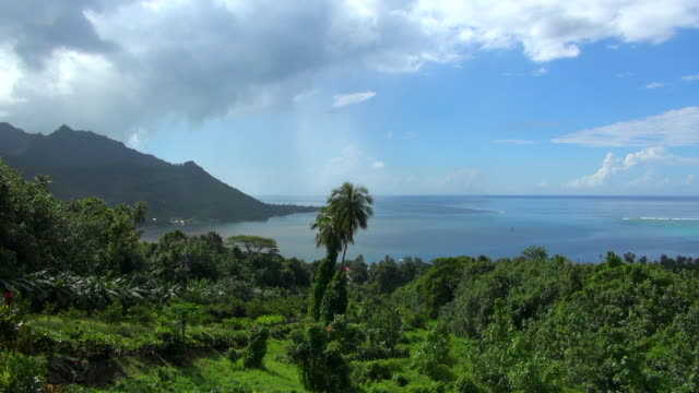 still shot view of french polynesian bay - insel moorea stock-videos und b-roll-filmmaterial