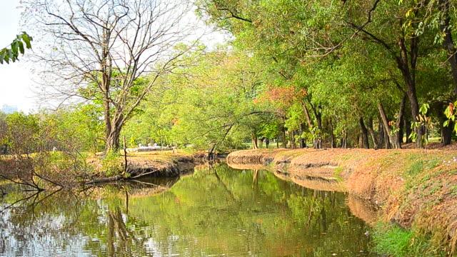 still swamp with sound of nature - full hd format bildbanksvideor och videomaterial från bakom kulisserna