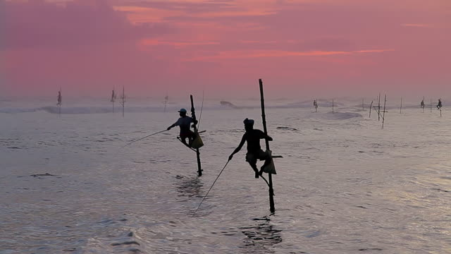 ms stilt fishermen (pole fishermen) silhouetted against sun / ahangama, southern province, sri lanka - pole stock videos & royalty-free footage
