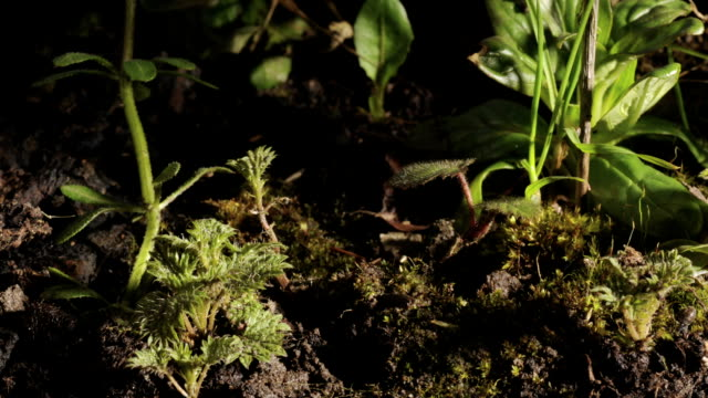 stinging nettles, timelapse - growth stock videos & royalty-free footage