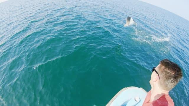 slo mo stingray springt aus dem wasser vor einem touristen - wal oder delfingruppe stock-videos und b-roll-filmmaterial