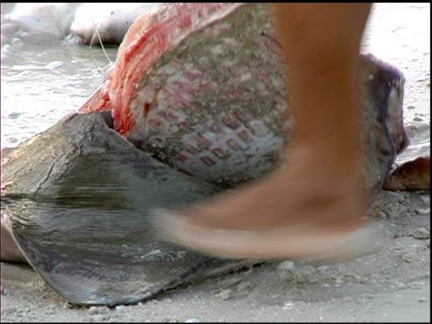 stingray slaughter in celestun mexico - stingray stock videos & royalty-free footage