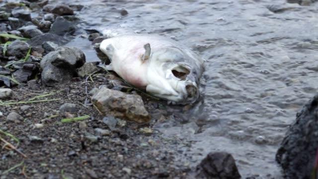 vídeos y material grabado en eventos de stock de huele a pescado muerto en la costa contaminada, desechos tóxicos que dañan la naturaleza - canal corriente de agua