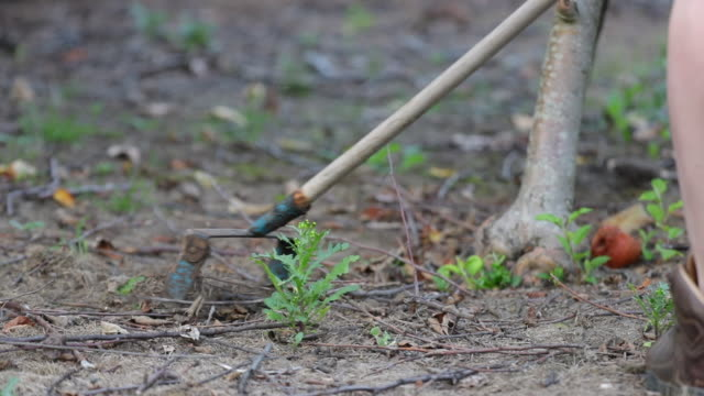 stirrup hoe weeder - garden hoe stock videos & royalty-free footage