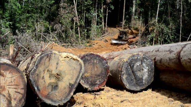 stock shots of logging in the rainforests of kalimantan on indonesian borneo clean : stock shots of logging in indonesian borne on january 01, 2014... - forestry industry stock videos & royalty-free footage