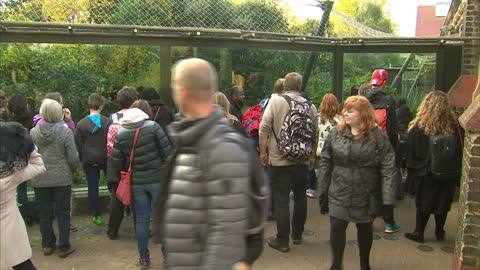 stock shots patrons walking around and looking at animals in captivity at the zsl london zoo. - animals in captivity stock videos & royalty-free footage