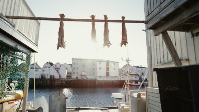 ノルウェーのロフォーテン諸島のストックフィッシュ産業 - タラ点の映像素材/bロール