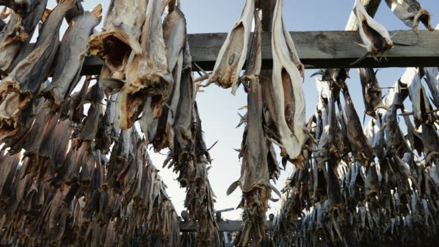 stockfish industry at lofoten islands in norway - drying stock videos & royalty-free footage