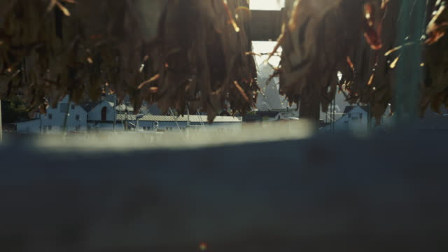 stockfish industry at reine, lofoten islands, norway - peschereccio video stock e b–roll