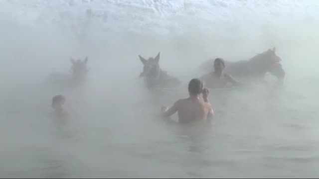 stockmen wash their horses in a hot spring during winter season as temperature reaches to -20 °c in budakli village of guroymak district in turkey's... - hooved animal stock videos & royalty-free footage