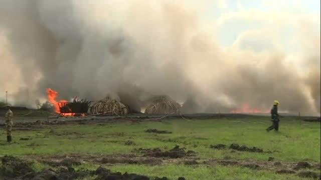 Stockpile of ivory burnt despite warning from critics KENYA EXT Huge clouds of smoke rising from burning piles of ivory elephant tusks Various of...