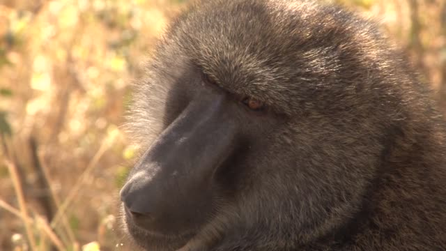 Stockshots of wildlife in Nakuru National Park and the Masai Mara Kenya Masai Mara Kenya