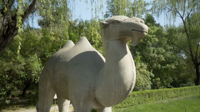 vidéos et rushes de stone camel statue at ming dynasty tombs during sunny day - beijing, china - ming